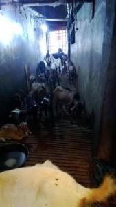 Cara membuat tengkleng kambing spesial 56748